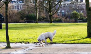 Zdjęcia z podróży: Vondelpark zimową porą