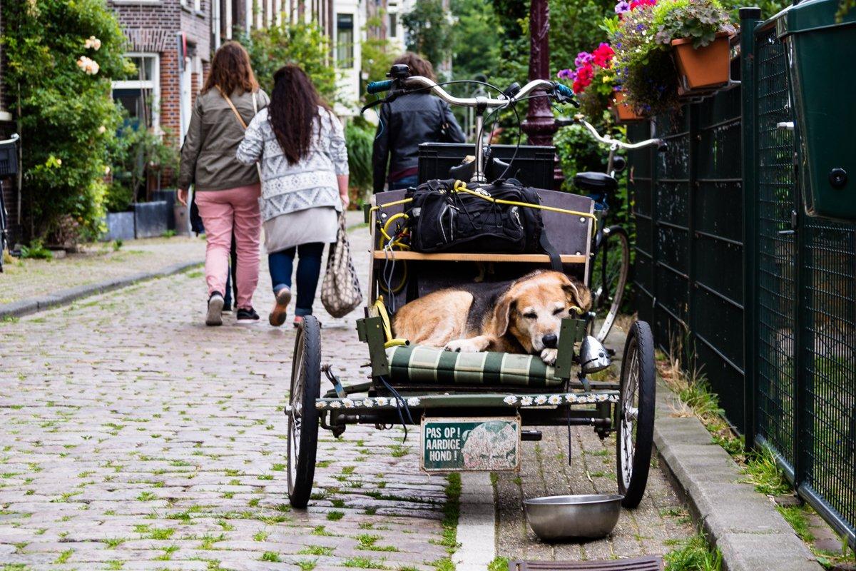 Ciekawe miejsca - Amsterdam: Westelijke Elianden