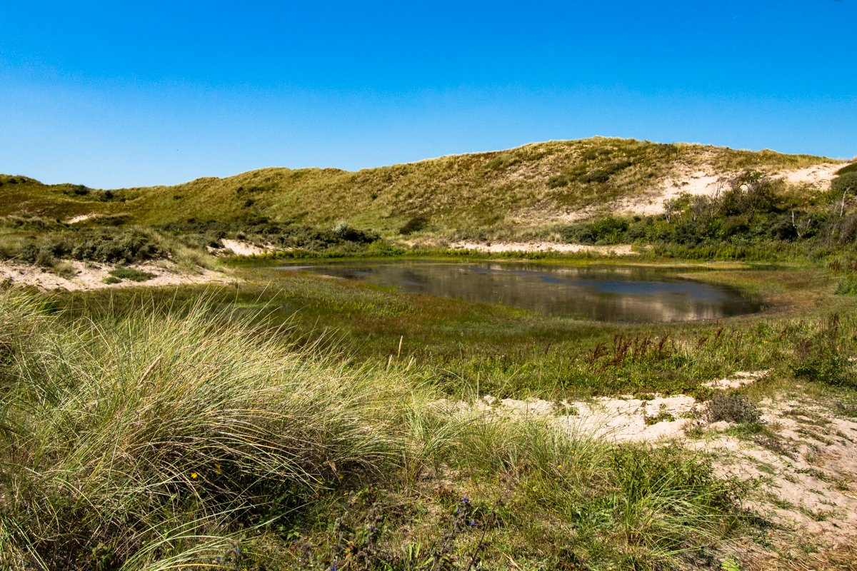 Dutch Dunes, Egmond aan Zee