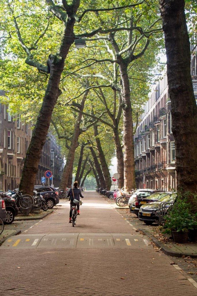 Szpaler drzew chylących się nad Lomanstraat w Amsterdamie.