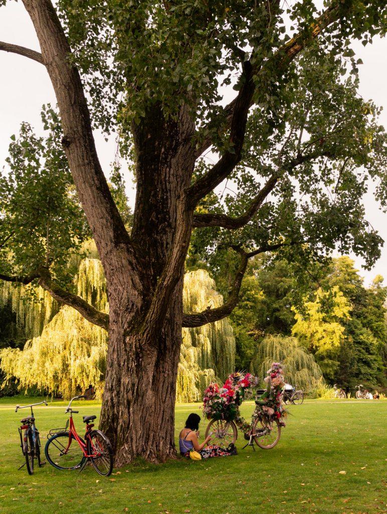 Kwiecisty rower w Vondelpark