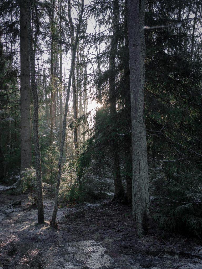 Леса в Финляндии